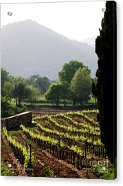 Spring Vines In Provence Acrylic Print