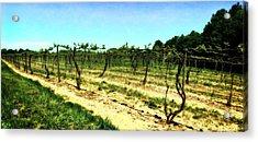 Spring Vineyard Ll Acrylic Print
