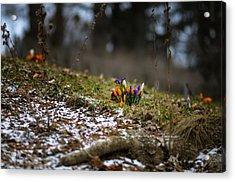 Spring Vs Winter Acrylic Print