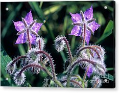 Acrylic Print featuring the photograph Spring Wild Flowers by George Atsametakis