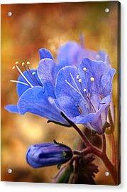 Spring Wildflowers - The Desert Bluebells Acrylic Print