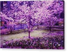 Spring Wonderland Pastel. Garden Keukenhof. Netherlands Acrylic Print by Jenny Rainbow