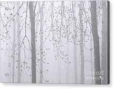 Acrylic Print featuring the photograph Spring Woodland Fog 2 by Alan L Graham