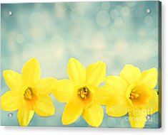 Spring Yellow Acrylic Print by Darren Fisher