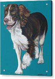 Springer Spaniel Acrylic Print by Gail Mcfarland