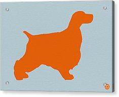 Springer Spaniel Orange Acrylic Print by Naxart Studio