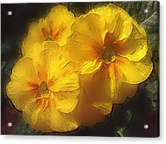 Acrylic Print featuring the photograph Springflower 5 by Gabriella Weninger - David