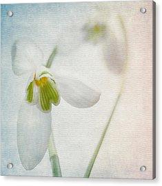 Springflower Acrylic Print by Annie Snel