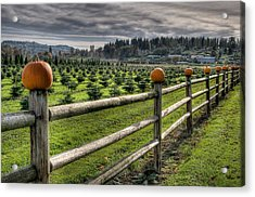Springhetti Road Pumpkins Acrylic Print by Spencer McDonald