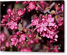 Acrylic Print featuring the photograph Spring's Arrival by Roselynne Broussard