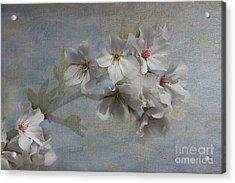 Springtime Acrylic Print by Anne Rodkin