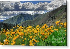 Springtime At Gallagher Acrylic Print