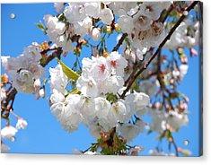Springtime Blossoms Acrylic Print by Richard Hinger