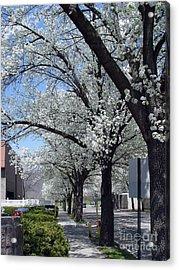 Springtime Corning Ny 2 Acrylic Print