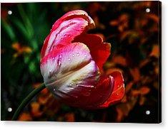 Springtime Acrylic Print by Doug Norkum