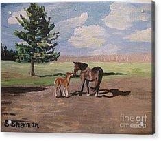 Springtime Foal Acrylic Print