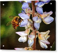 Acrylic Print featuring the photograph Springtime II by Dawn Currie