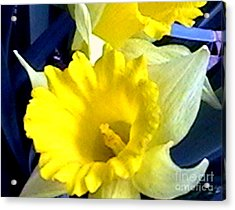 Springtime In Arkansas Acrylic Print