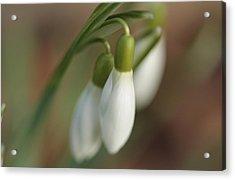 Springtime In Motion Acrylic Print