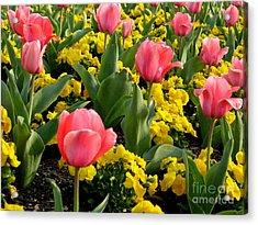 Springtime In South Acrylic Print