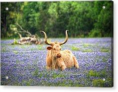 Springtime In Texas Acrylic Print