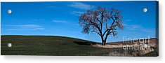 Springtime In The Palouse Acrylic Print by Sharon Elliott