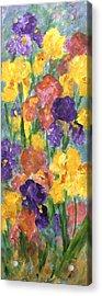 Springtime Iris Acrylic Print