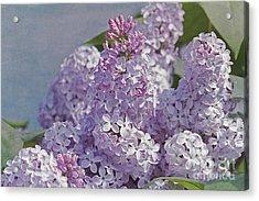 Springtime Lilacs Acrylic Print