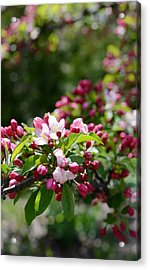 Acrylic Print featuring the photograph Springtime by Linda Mishler