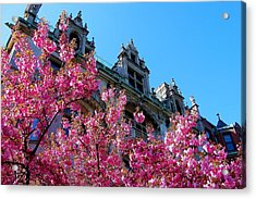 Springtime On Commonwealth Avenue Acrylic Print