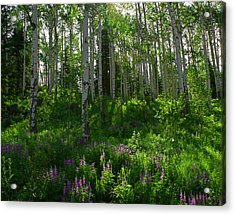 Springtime On The Grand Mesa Acrylic Print by Ernie Echols