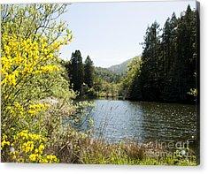 Springtime Phoenix Lake Acrylic Print by Juan Romagosa