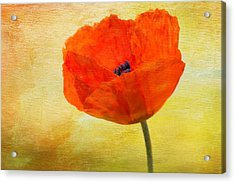 Springtime Poppy Beauty Acrylic Print