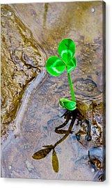 Springtime Sentinel Acrylic Print by Brian Gibson