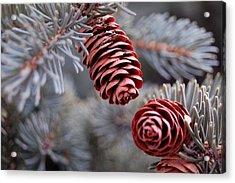 Spruce Cone Closeup II Acrylic Print