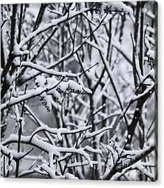 Square Snowy Branches Acrylic Print by Birgit Tyrrell
