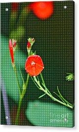 Squared Glory Acrylic Print