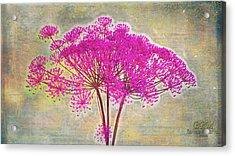 Squiggle Fun Pinked Acrylic Print