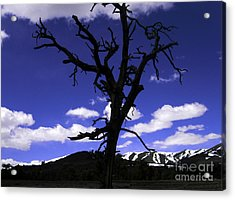 Acrylic Print featuring the photograph Squigly Tree by Janice Westerberg