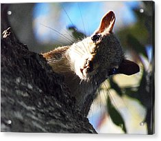 Acrylic Print featuring the photograph Squirrel 003 by Chris Mercer