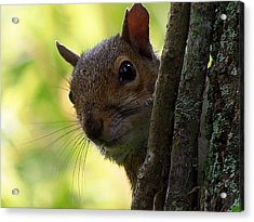 Squirrel 025  Acrylic Print
