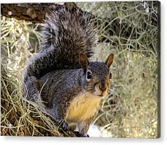 Squirrel 3 Acrylic Print