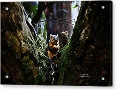 Squirrel 8309 - F Acrylic Print by James Ahn