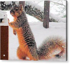 Acrylic Print featuring the photograph Squirrel Checking Out Seeds by Janette Boyd