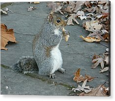 Squirrel Chomping On Bread Acrylic Print