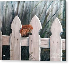 Squirrel Dining On Pine Acrylic Print by Stephen Schaps