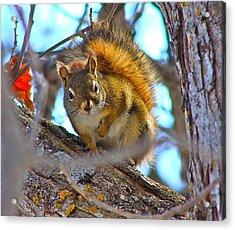 Squirrel Duty. Acrylic Print