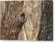 Squirrel Hole Acrylic Print by Jill Bell