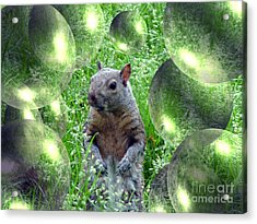 Squirrel In Bubbles Acrylic Print