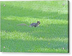 Acrylic Print featuring the photograph Squirrel In Grass by Lorna Rogers Photography